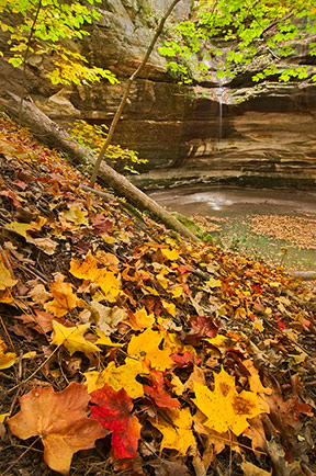 Starved Rock Fall Color Photo Outing